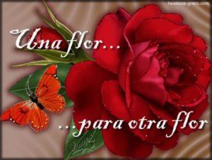 Imágenes De Amor Con Rosas Imágenes Bonitas