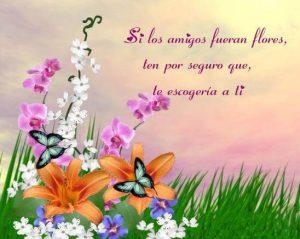 Hermosas Imagenes De Flores Con Frases Para Dedicar