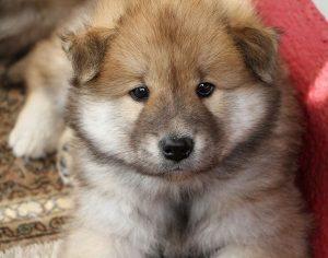 Imágenes de Perros bonitas