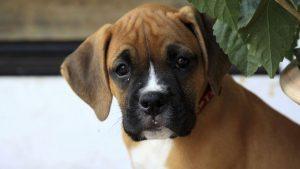 Imágenes de Perros bonitas yherosas