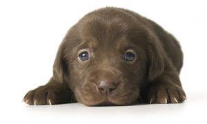 Imágenes de Perros cachorros