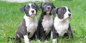 Imágenes de Perros para descargar