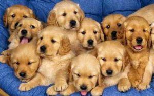 Imágenes de Perros para el celular
