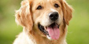 Imágenes de Perros para portada