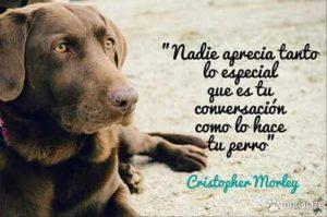 imagenes de perros con frases bonitas