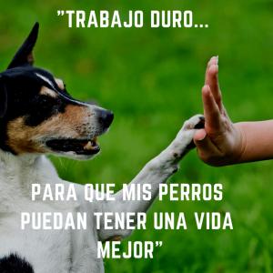 imagenes de perros con frases lindas