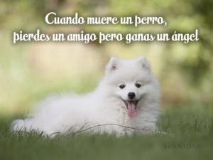 imagenes de perros con frases tiernas