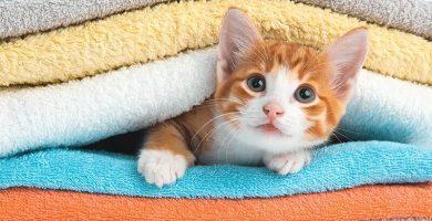 imagenes de gatos hermosas