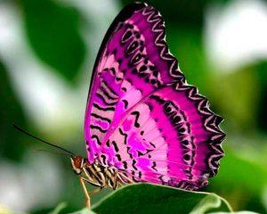 Imágenes Bonitas de Mariposas