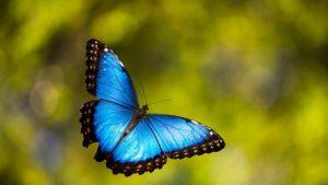 Imágenes Bonitas de Mariposas gratis