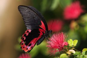 Imágenes Bonitas de Mariposas para bajar