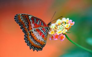 Imágenes Bonitas de Mariposas para descargar gratis