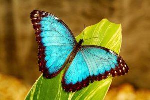 Imágenes Bonitas de Mariposas reales