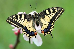 Imágenes Bonitas de Mariposas sin frases