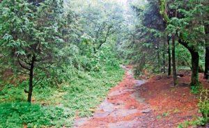 bosques bonitos