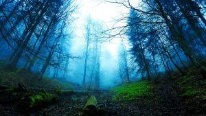 bosques para descargar