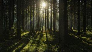 fondos de pantalla de bosques