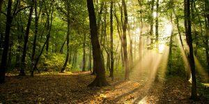 imágenes de árboles y bosques