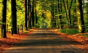 imágenes de bosques bonitos