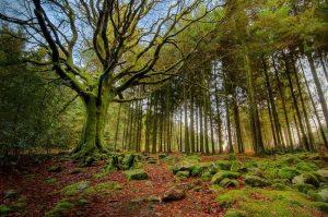 imágenes de bosques chidas