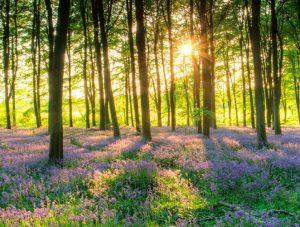 imágenes de bosques con flores