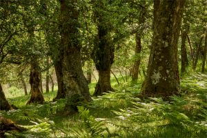 imágenes de bosques para descargar