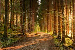 imágenes de bosques para fondo