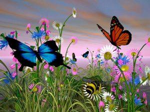 imágenes de mariposas para bajar