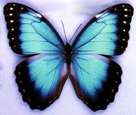20 Imagenes Bonitas De Mariposas Listas Para Descargar