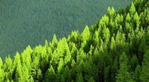 imagenes de bosques de portada