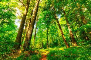 imagenes de bosques hermosas