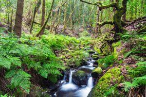 imagenes de bosques lagunas
