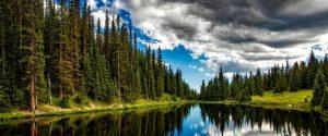 imagenes de bosques para bajar