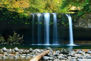 imagenes de bosques y cascadas