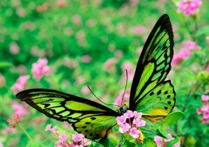 mariposas bonitas chidas