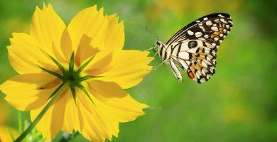 mariposas para bajar