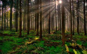 wallpapers de bosques bonitos