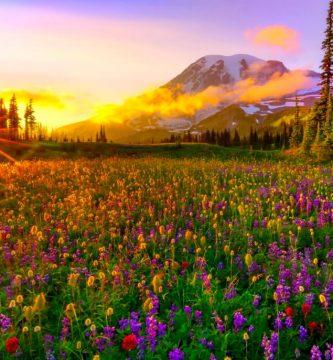 imágenes bonitas de primavera