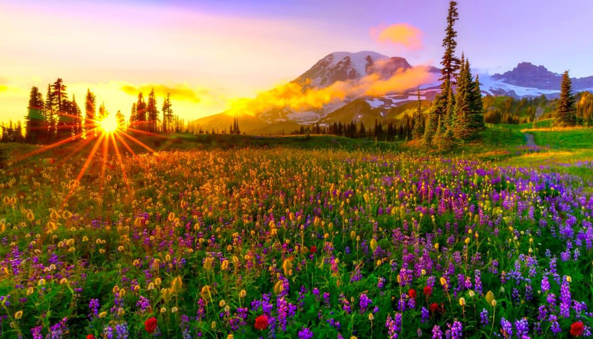 Las Mejores Imágenes De Primavera Para Descargar Muy Bonitas
