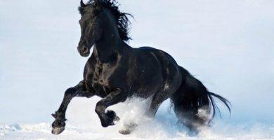imagenes de caballos negros
