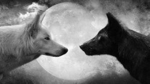 imágenes bonitas de lobos