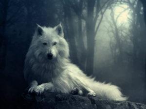imagenes bonitass para descargar de lobos