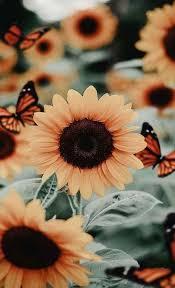 Imagenes Aesthetic flores